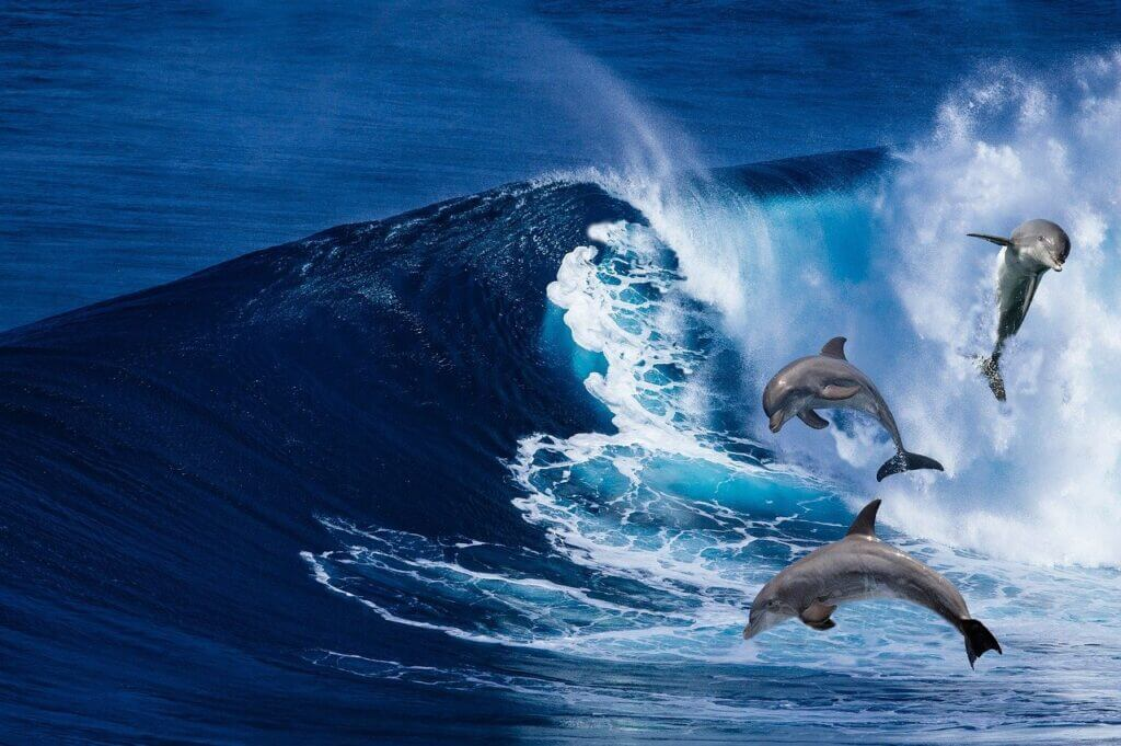 Dolphins Mammals Waves  - illusion-X / Pixabay Extremely Scary Facts to Know | Creepy Facts
